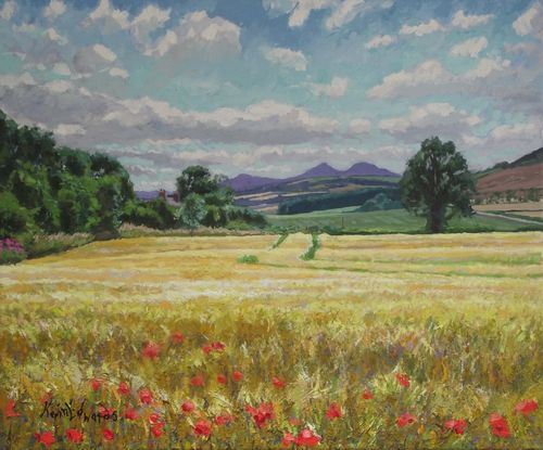 Wheatfield and poppies