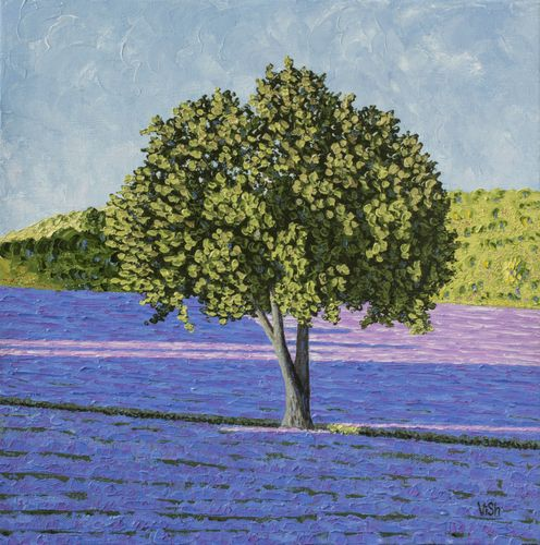 """A tree in the middle of the lavender field"""