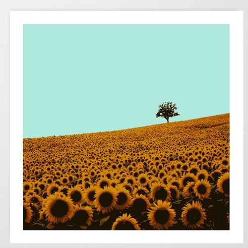 Sunflowers in green