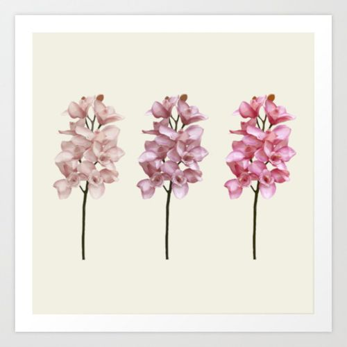 Three tones orchids