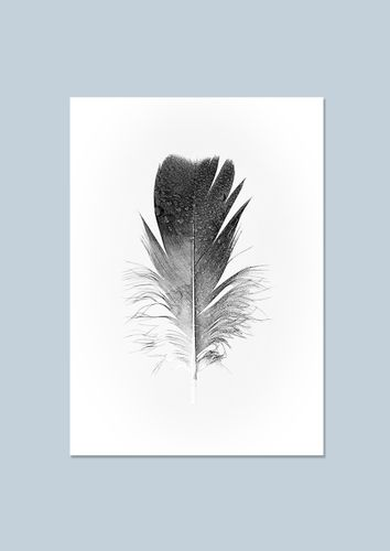 Trending art: Feather With Drops
